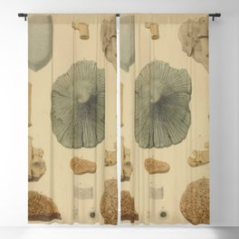 Coral Fossils Blackout Curtain