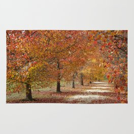 Sun Lit Tree Lined Avenue in Autumn Rug