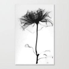 Pretty Xray Canvas Print