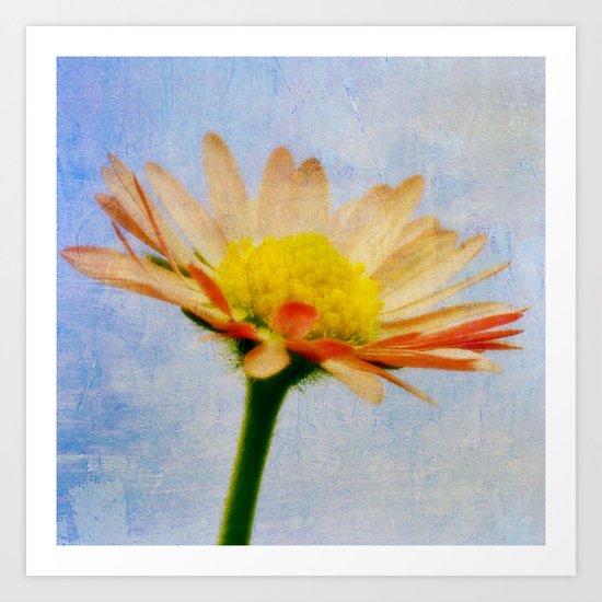 Daisy Texture Art Print