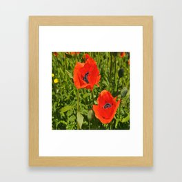poppies nature Framed Art Print