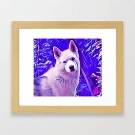 Isabella White Siberian Husky Framed Art Print
