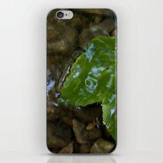 Glaze iPhone & iPod Skin