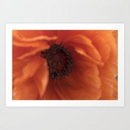Heart of the poppy Art Print