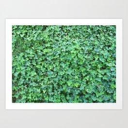 Green Clovers Nature Photo #GaneneKPhotogaphy #StPatricksDay Art Print