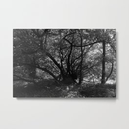 Trees near the River Metal Print