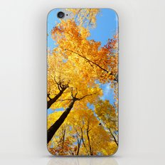 Fall Forest Sky iPhone & iPod Skin