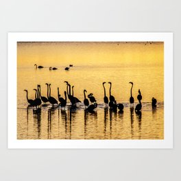 Silhouette of Pink Flamingos Art Print