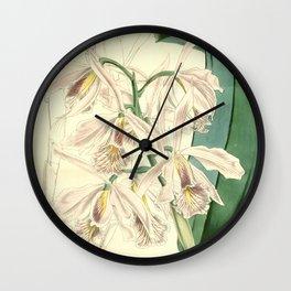 Cattleya maxima Wall Clock