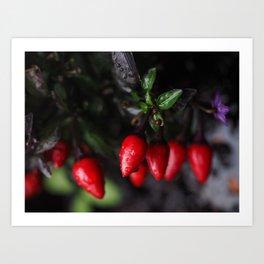 Red Hot Garden Salsa Chili Peppers. Art Print