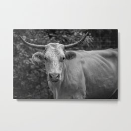 Stare at the bull, get the horns Metal Print