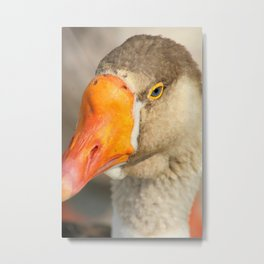 Beak and Eye of a Goose Metal Print