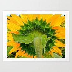 Sunflower's other side Art Print