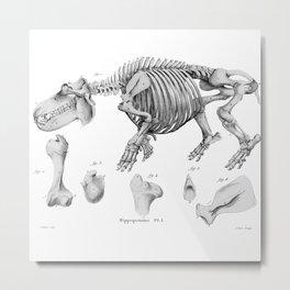 Vintage Hippo Skeleton Metal Print
