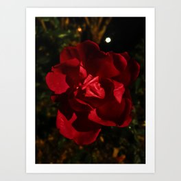 Blood red flowers in the cold night Art Print