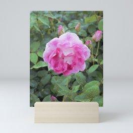 Chantilly Pink Mini Art Print