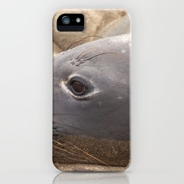 Elephant Seal iPhone Case