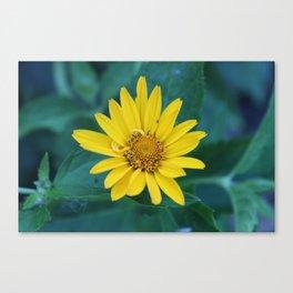 Wallflower Canvas Print
