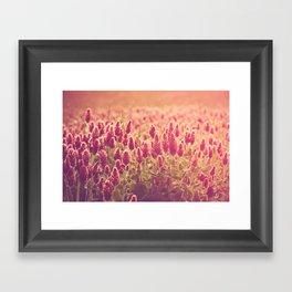 Crimson Clover Field Framed Art Print