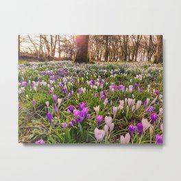 CARPET OF SPRING FLOWERS Metal Print