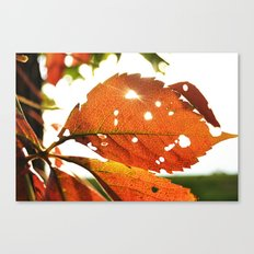 Shine A Light Canvas Print