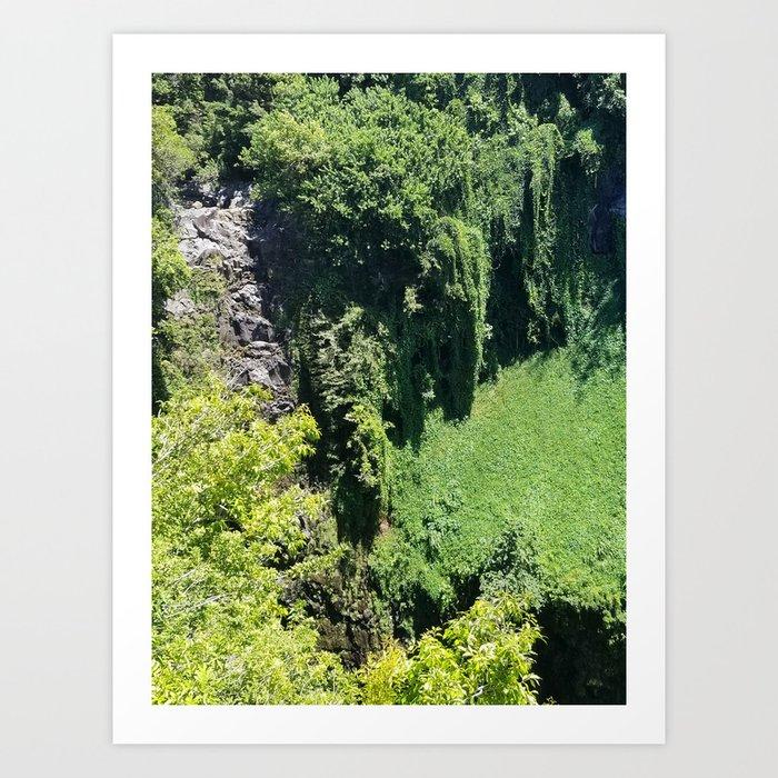 Rainforest From Above Art Print