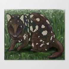 Quoll Canvas Print