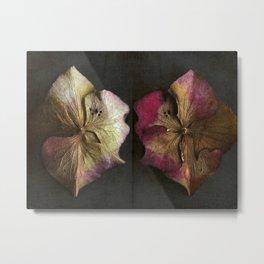 Vintage Hydrangea Petals Metal Print