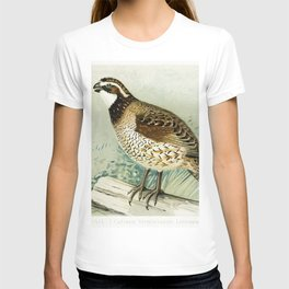 Quail (Colinus Viginianus Linnaeus) illustrated by JL Ridgway (1859-1947) and WB Gillette (1864-1937 T-shirt