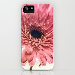 A Daisy for You a bouquet of Gerber Daisies iPhone Case