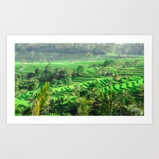 Rice Fields Art Print