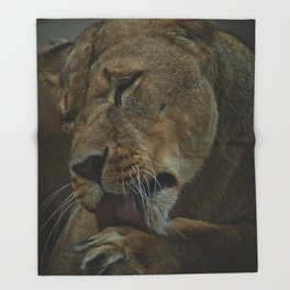 Lioness Licking Her Paw Throw Blanket