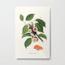 Sushi Plant Metal Print