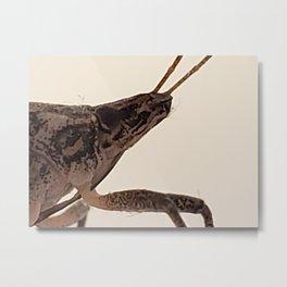 Stinkbug Metal Print