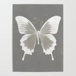 Butterfly on grunge surface Poster