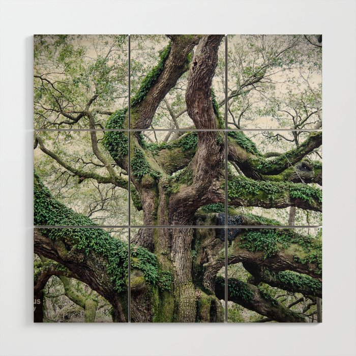 angel oak Wood Wall Art