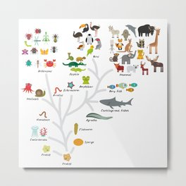 Evolution in biology, scheme evolution of animals on white. children's education back to scool Metal Print