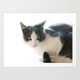 A Max And Mantle Bi Colour Cat Isolated Art Print