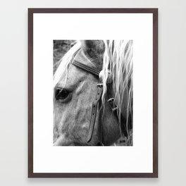The Yellow Horse  Framed Art Print