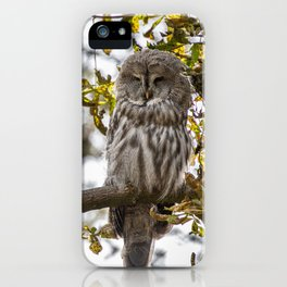 Great grey owl resting on a tree in the morning iPhone Case
