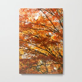 Maple tree foliage Metal Print