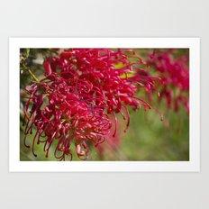 Flor roja Art Print
