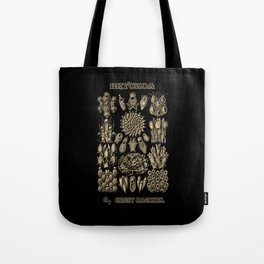 """""""Bryozoa"""" from """"Art Forms of Nature"""" by Ernst Haeckel Tote Bag"""