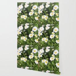 Daisy Daze Wallpaper