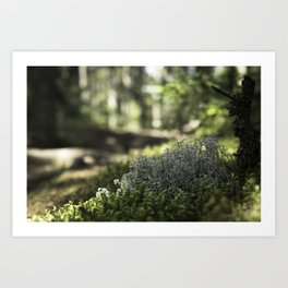 Mountain Forest Floor Art Print