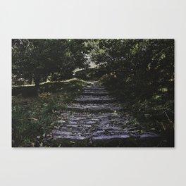Wander - Nature Photography Canvas Print