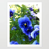 Viola Blue Flower Art Print