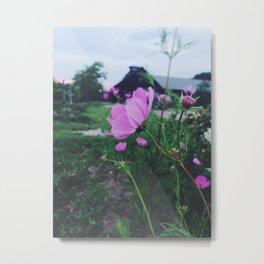 Pink Poppy Metal Print