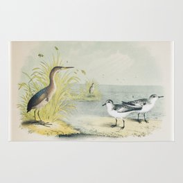 PLATE XL The Least Bittern The Sanderling, or Ruddy Plover Ornithology Birds Vintage Studies America Rug