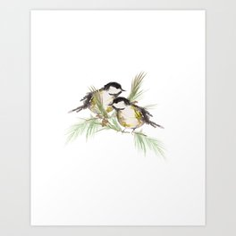Finch couple  Art Print